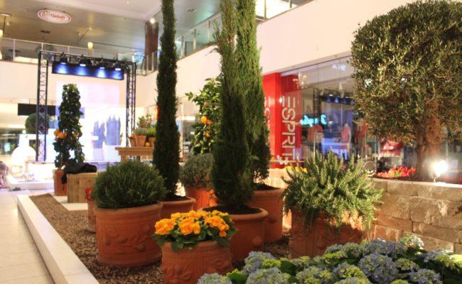 mietgefaesse-fuer-pflanzen