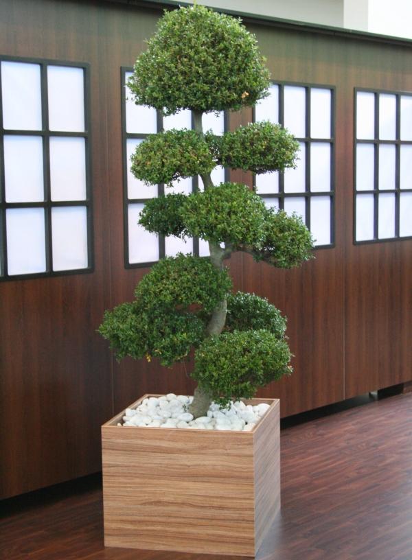 mietpflanze-buchsbaum