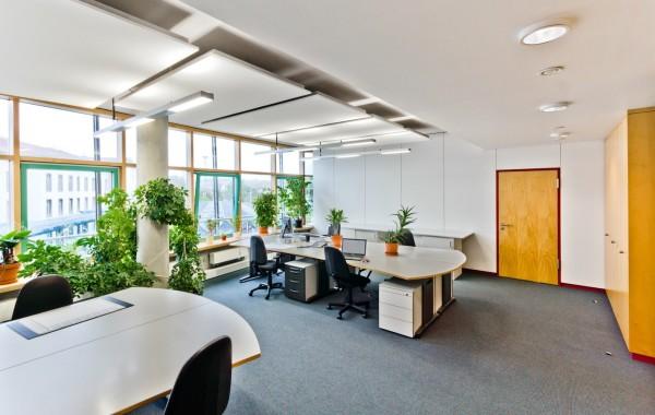 Raumbegrünung Büro/Privat