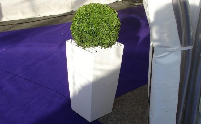 Mietpflanzen2