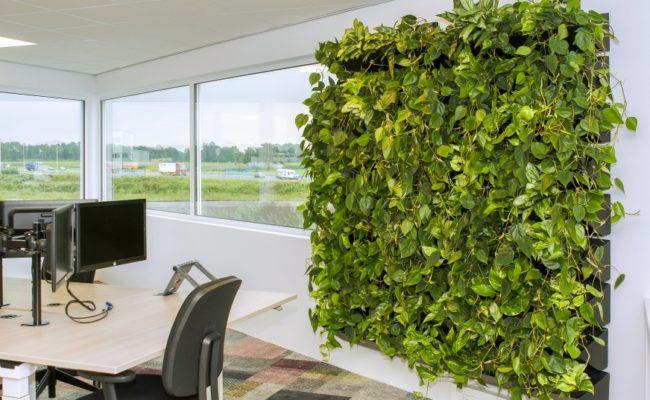 Pflanzwände_Büro